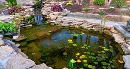 Oczko wodne - galeria zdjęć