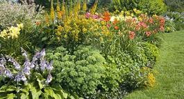 Byliny ogrodowe - zestawienie