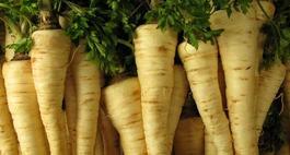 Pietruszka – uprawa, odmiany i właściwości