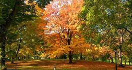 Drzewa ozdobne dla początkujących