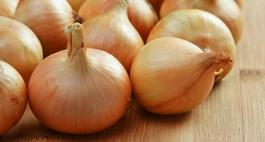 Cebula cukrowa - uprawa, odmiany i choroby