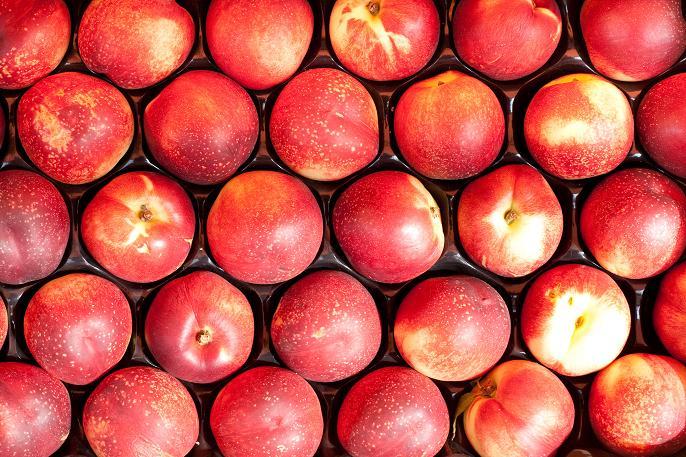 Kektarynka Owoc