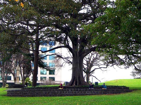 Zabezpieczenie drzew