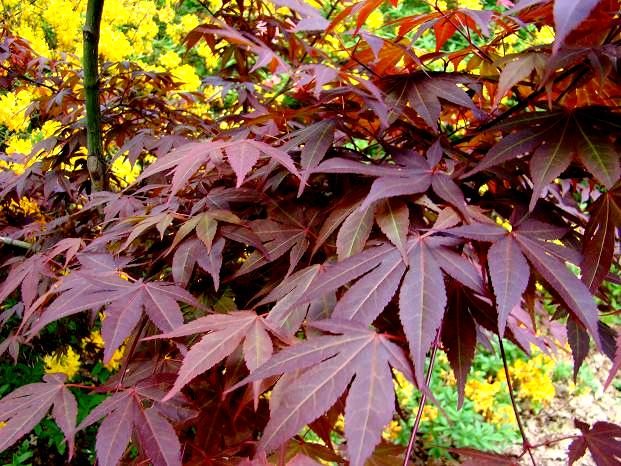 Fioletowe rośliny