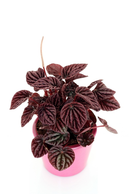 Fioletowe kwiaty - Rośliny w kolorze fioletowym