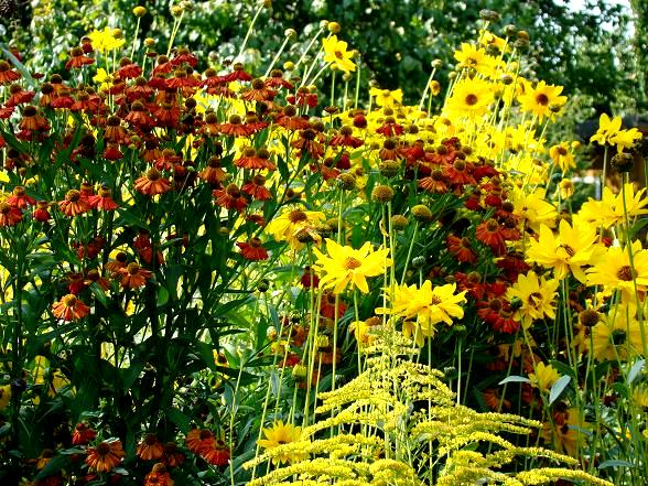 Rośliny na kwiaty cięte