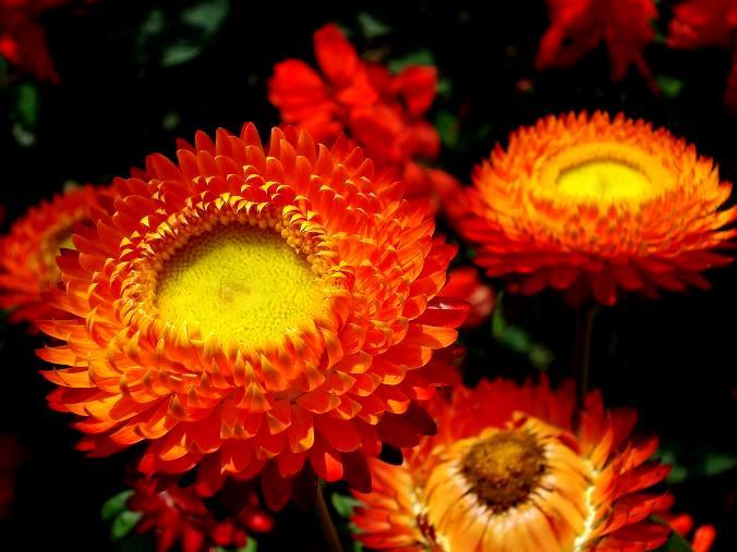 Kwiaty na bukiety