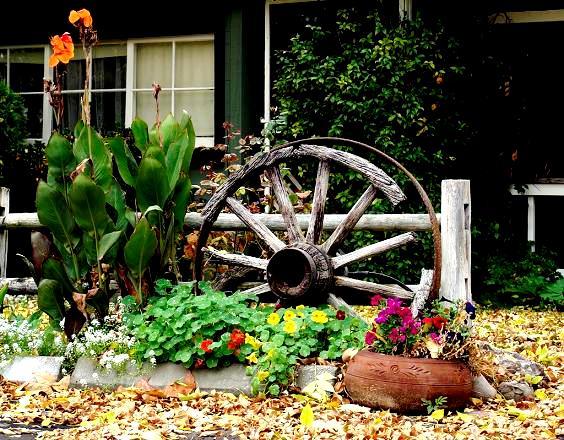 Kwiaty W Donicach