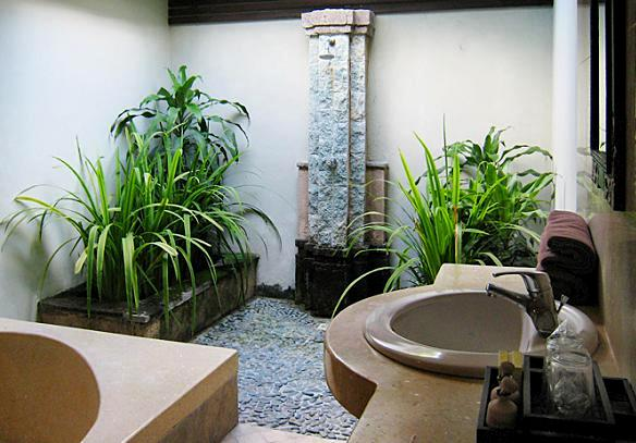 Rośliny Do łazienki Jakie Kwiaty Najlepsze Są Do łazienki