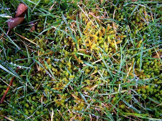 Mech na trawniku