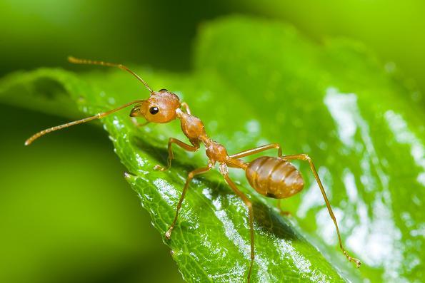 Jak Zwalczać Mrówki W Ogrodzie