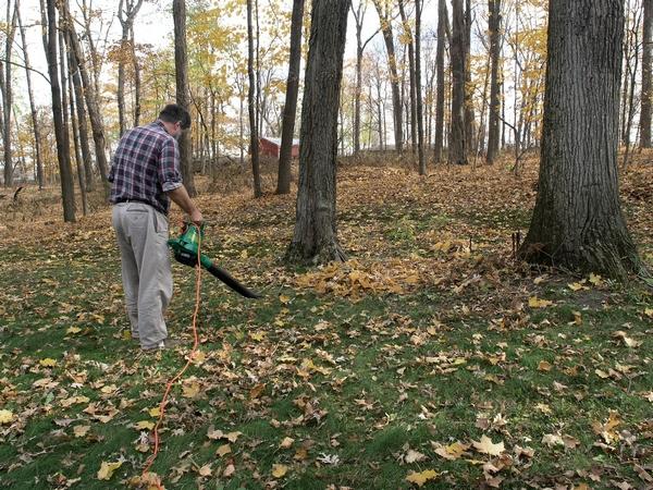 Odkurzanie liści
