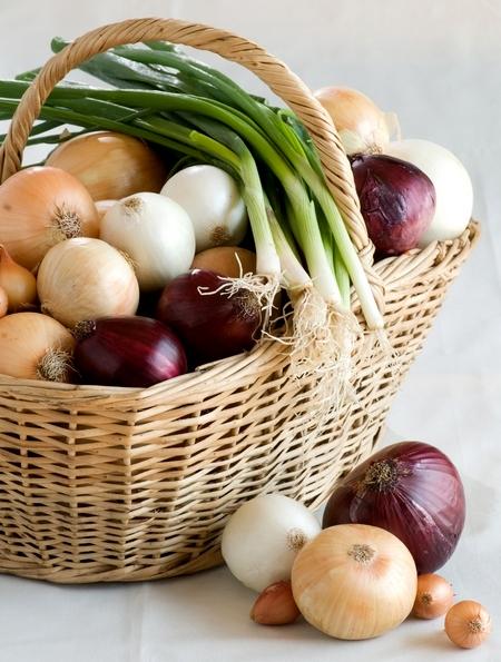 Odmiany cebuli