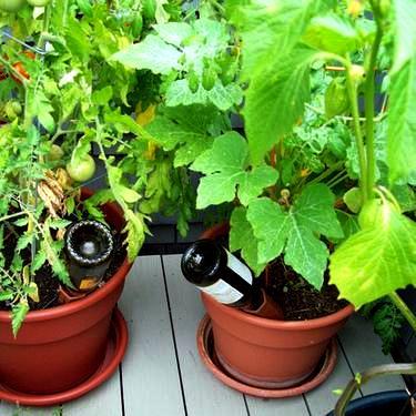 Podlewanie roślin podczas urlopu