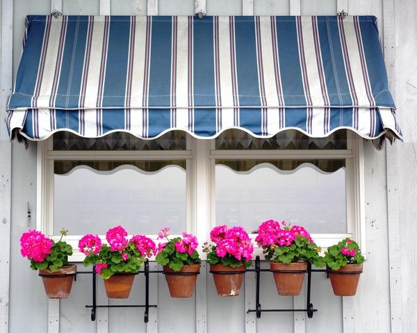 Rośliny balkonowe dla każdego - pelargonie