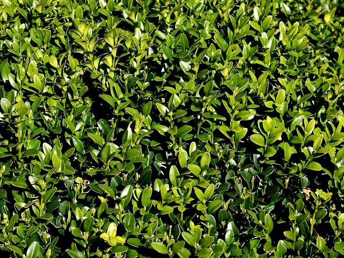 Rośliny zielone przez cały rok