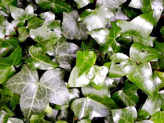 Zielone rośliny