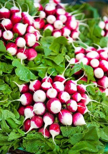 Rzodkiewka – uprawa, odmiany i właściwości