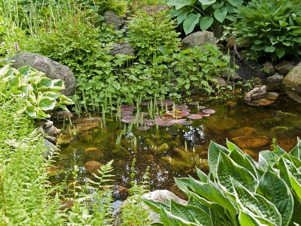 Sadzenie roślin wodnych