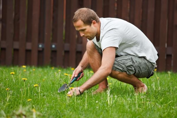 Trawnik na wiosnę - usuwanie chwastów