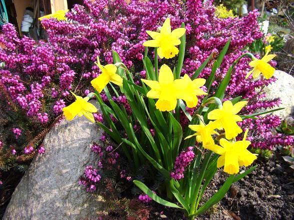 Wiosenne kwiaty cebulkowe