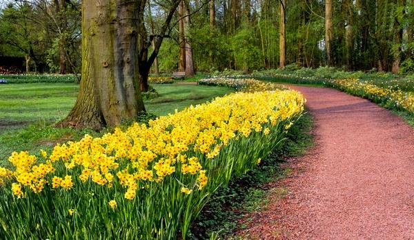 Wiosenne rośliny - narcyzy