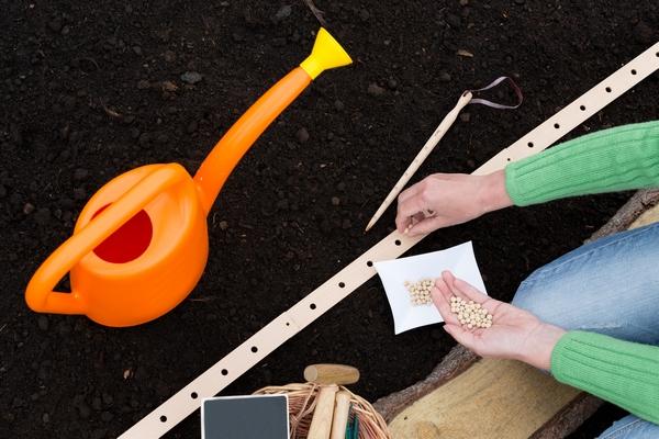 Wysiew nasion warzyw
