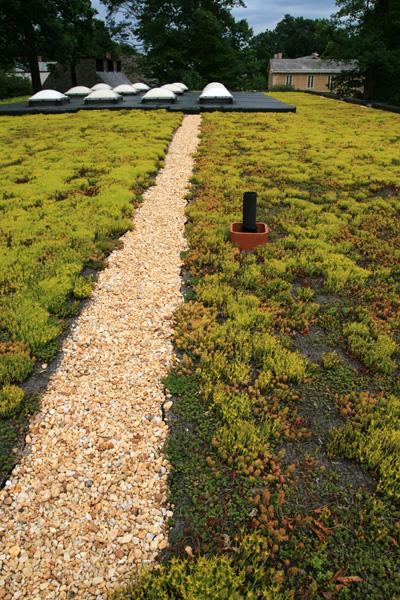 Uprawa rozchodników - zielone dachy