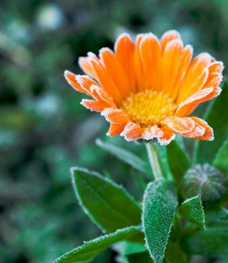 zimni ogrodnicy
