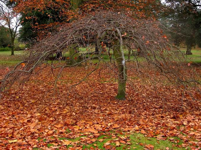 Drzewa o zwisajacych pędach