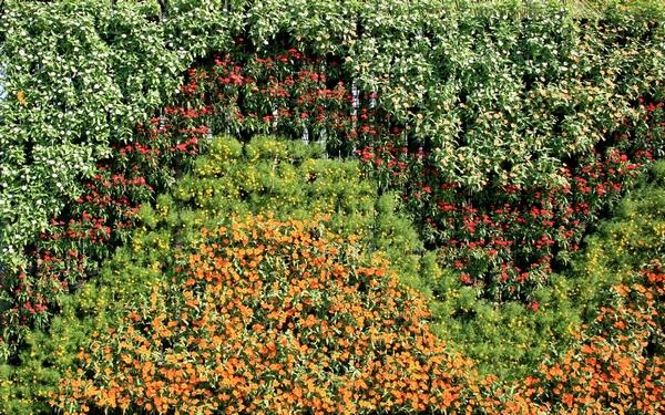 Ogr d wertykalny tajemnicze zielone ciany Tipos de plantas para jardines verticales